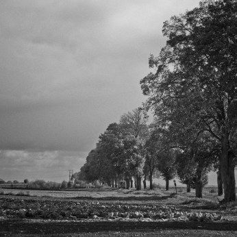 wuthering_06