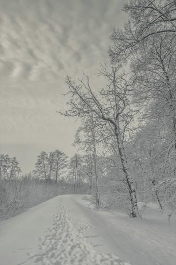 winter_fell_04
