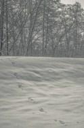 winter_fell_23