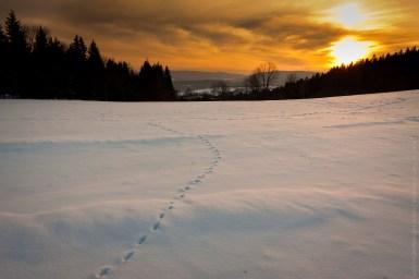 Šumavská cesta