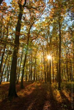 Podzim na Krásné stráni