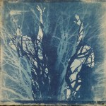 Original monoprint by Tona Williams