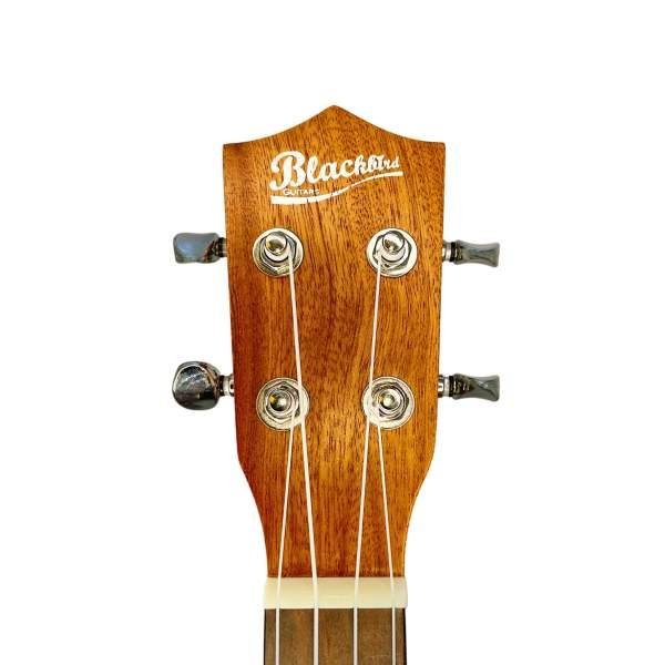 Produktnærbillede af hovedet på en koncert/tenor-ukulele med hvid baggrund