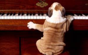 130129_pianoforte-cane