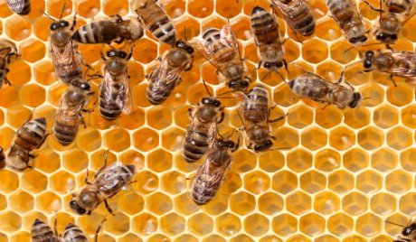 The Buzz Over The Dire Decline In Bee Populations