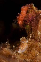 Mar Menuda, Tossa de Mar. 18m. 13ºC