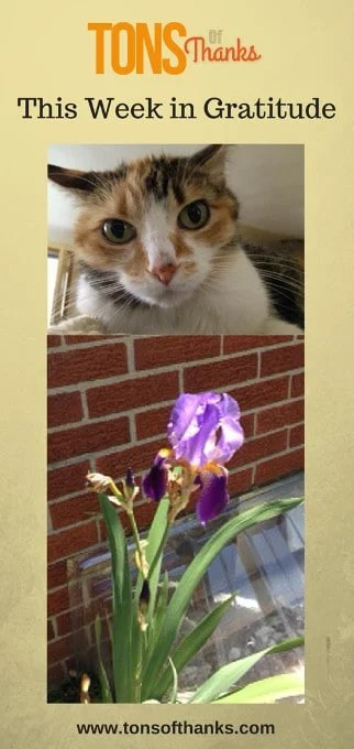 This Week in Gratitude includes my cat and irises