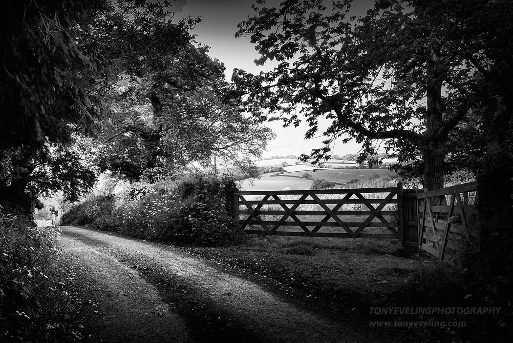Rural scene in the Devon countryside, near dartmoor national park