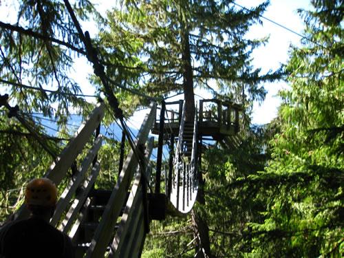Treetop Platforms