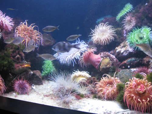 NE Aquarium fish tank