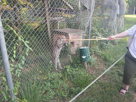 Carolina Tiger Rescue (2)