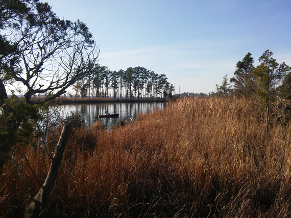 Goose Creek State Park marsh