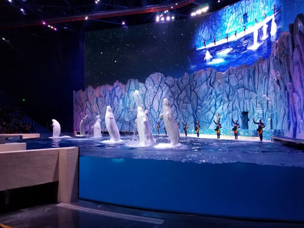 Chimelong beluga show