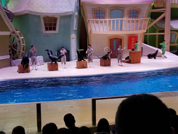 Chimelong sea lion show