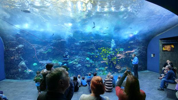 Georgia Aquarium diver demo