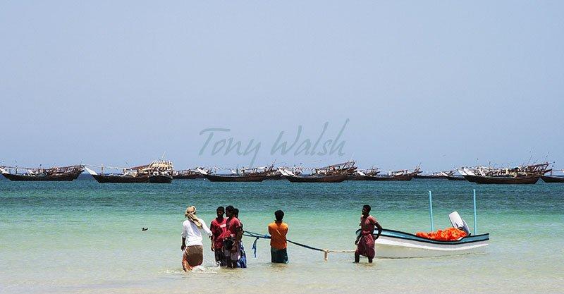 Masirah Island Dhows