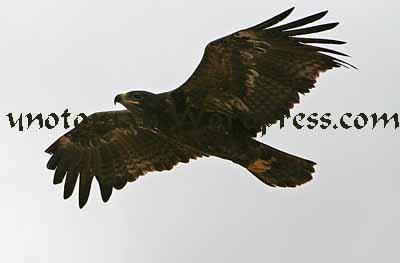 Eagle Salalah
