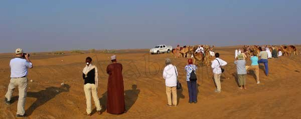 Camel Race in Oman