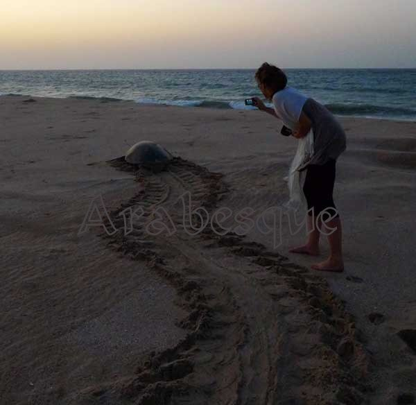Green Turtle returns to sea at Dawn