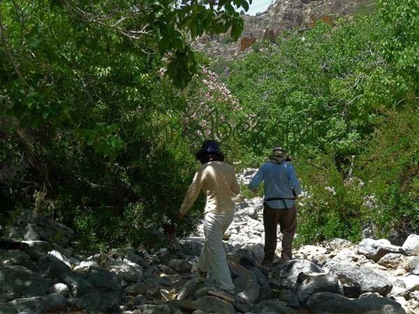 Walking in an Omani Wadi