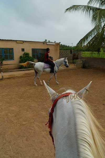 Salalah Horse Riding