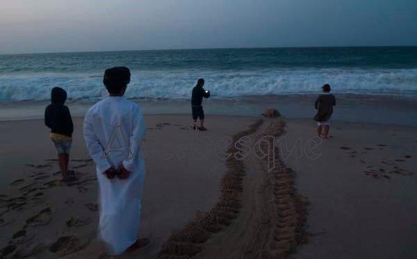 Turtle Watching in Oman