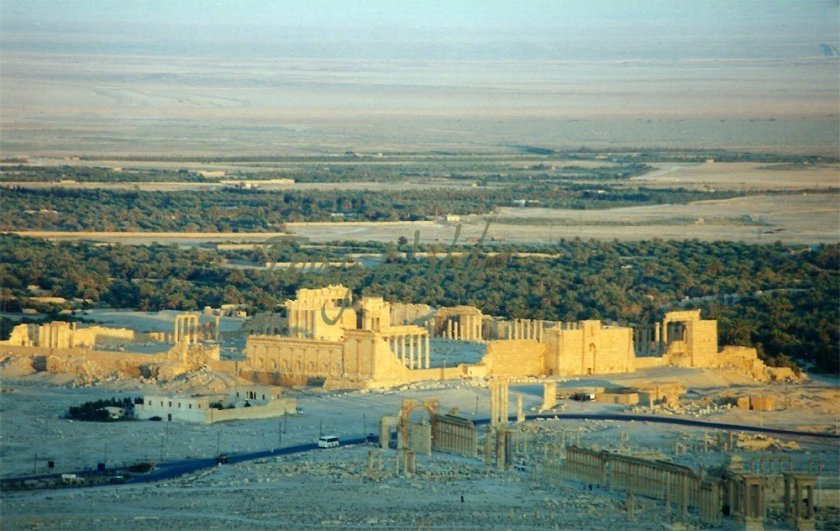 City of Palmrya
