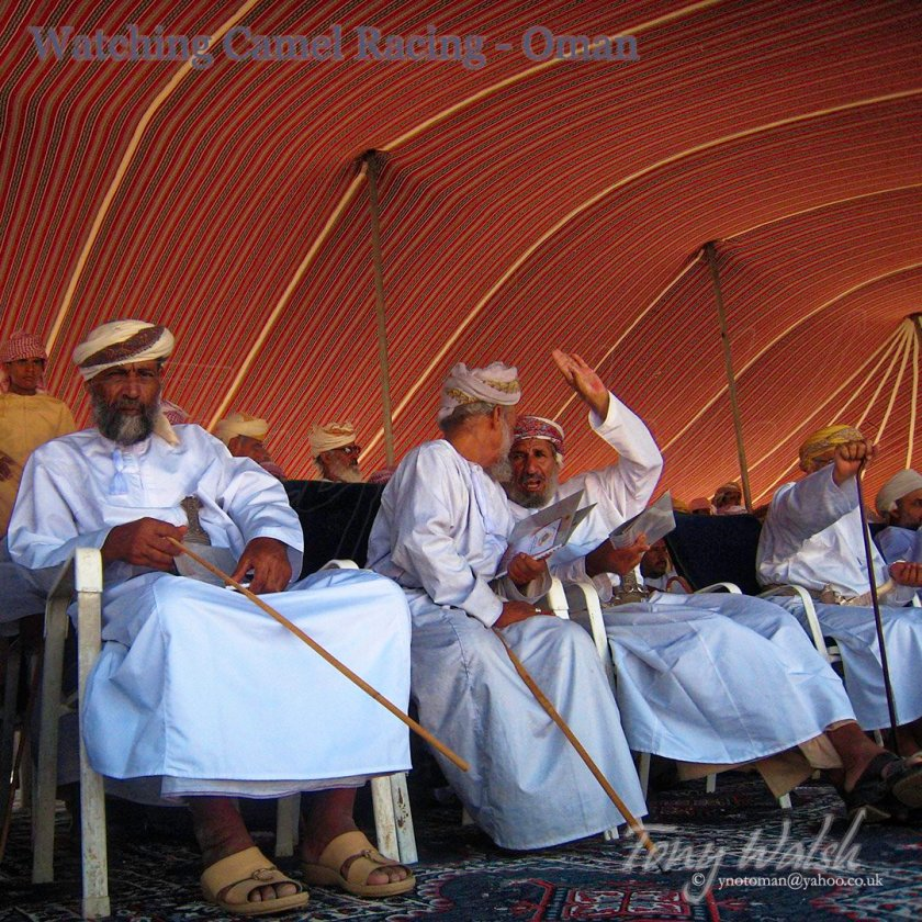 Watching Camel Racing Oman