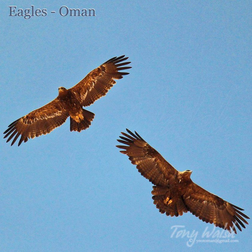 Eagles Oman