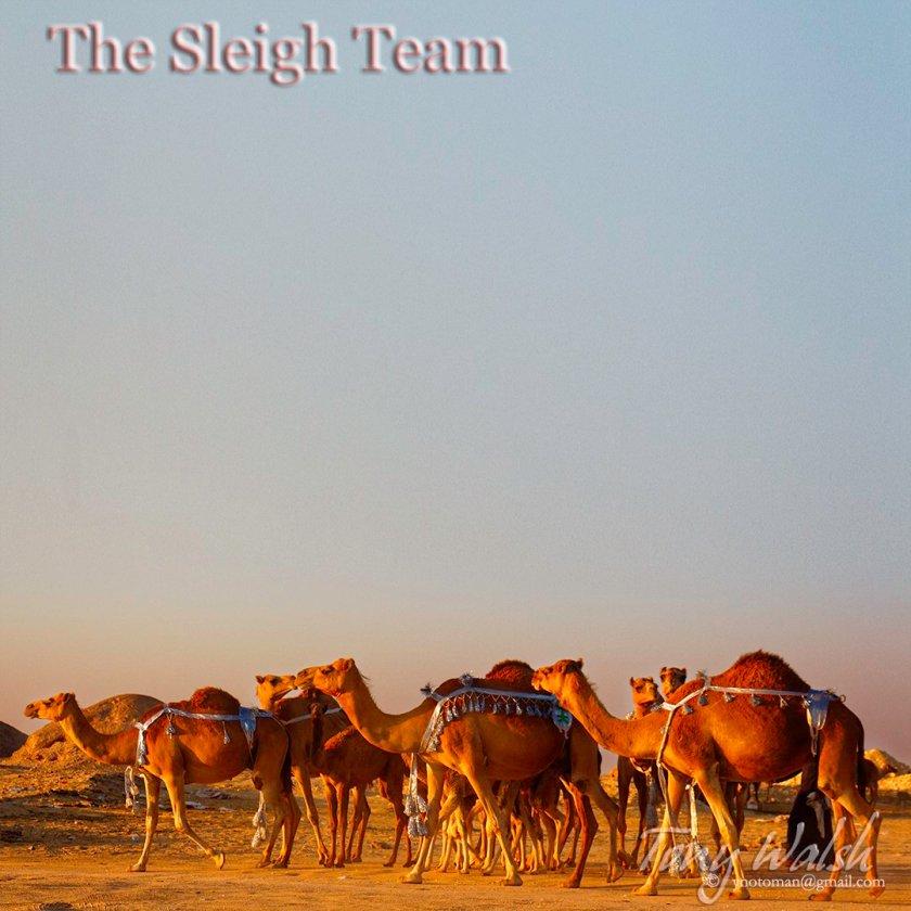 The Camel Sleigh Team