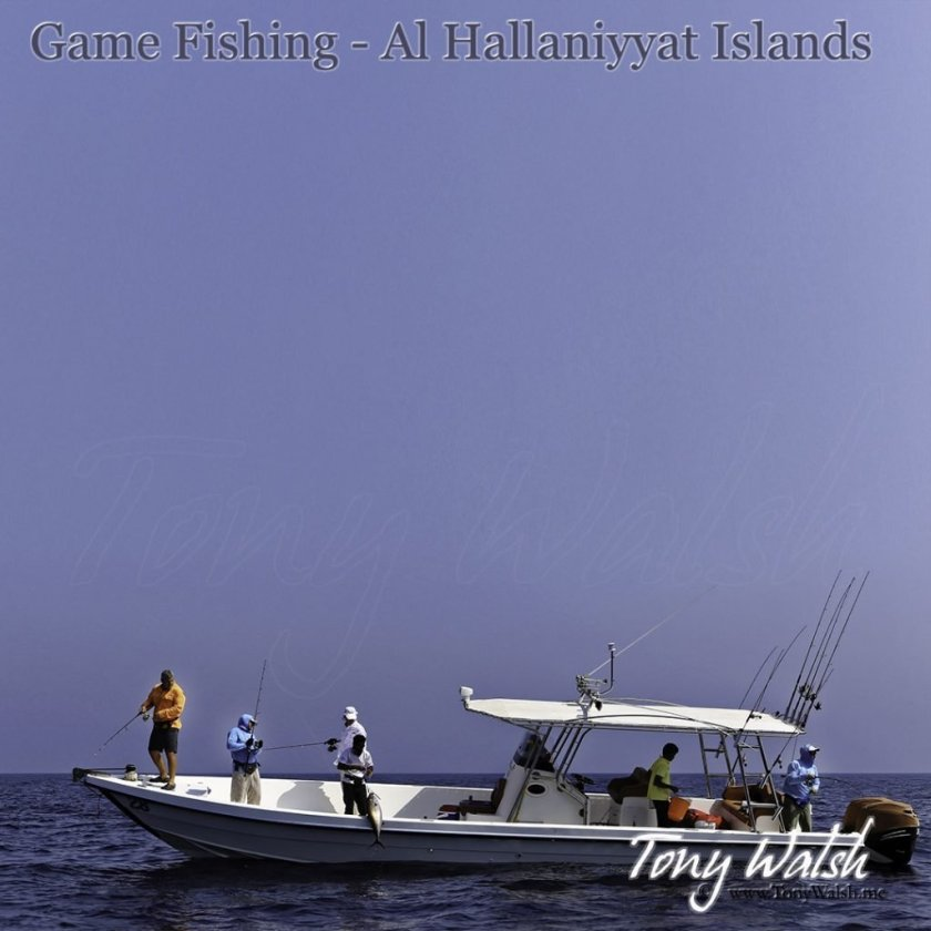Game Fishing - Al Hallaniyyat Islands Oman's Top 5 things to do in March