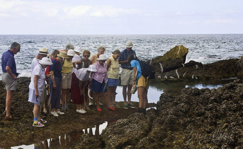 Studying Rock Pools Dhofar