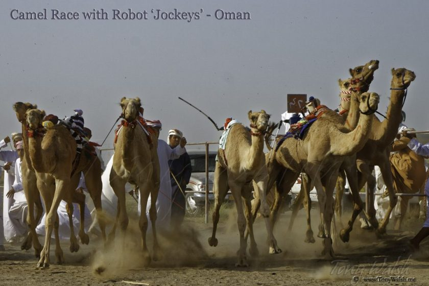 Camel Race with 'Robot Jockey' 10 reasons to visit muscat this winter