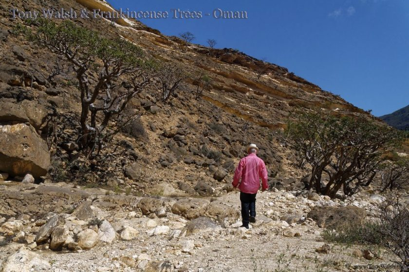 Tony Walsh & Frankincense Trees - Oman
