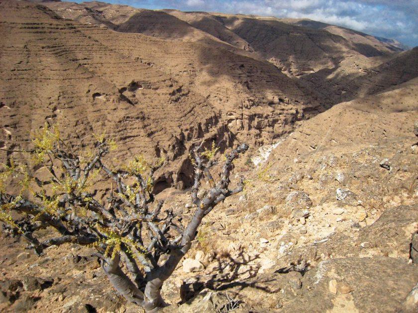 Dalkut Mountains Dhofar