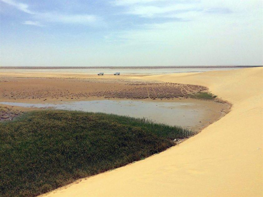 Al-Asfar lake ecosystem - François Cristofoli