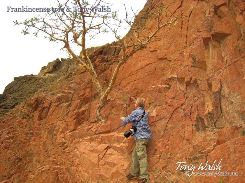 Frankincense tree & Tony Walsh