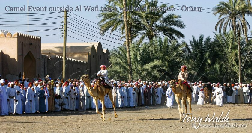 Camel Event outside Al Wafi town wall and mosque - Oman