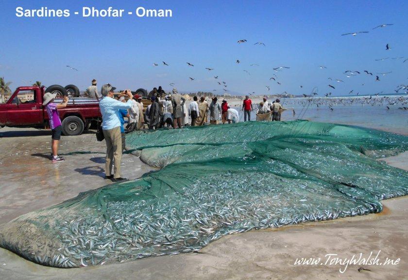 Sardines Dhofar Oman