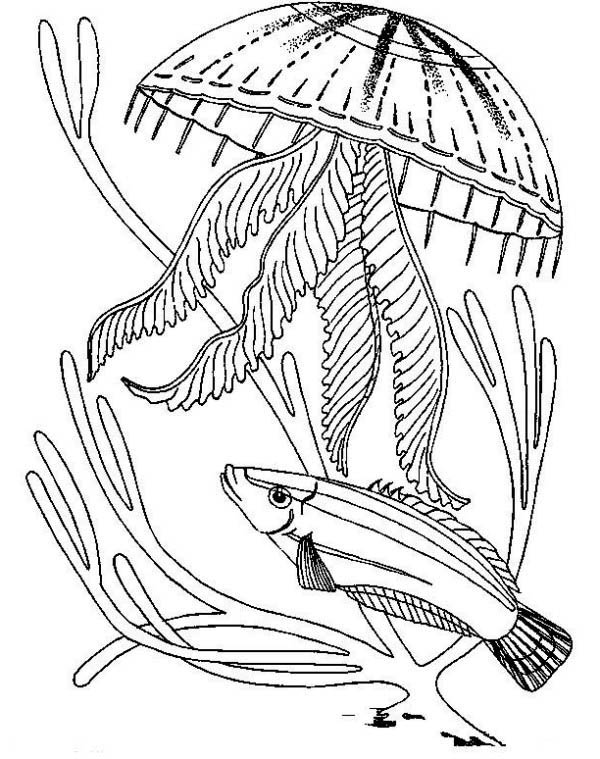 How To Color Jellyfish Attack A Fish Coloring Page For Kids Toodsy Color