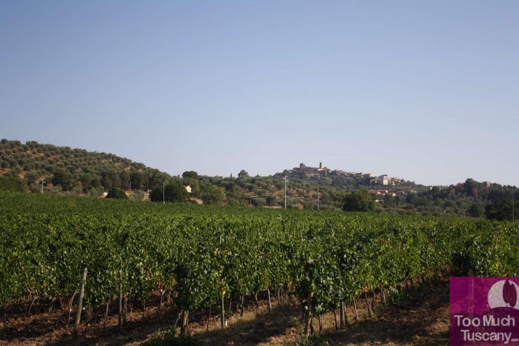Vineyards in Maremma