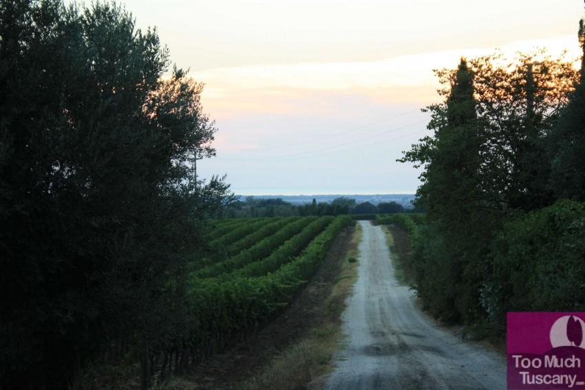 Bolgheri surroundings