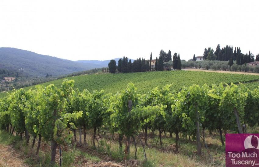 Florentine Chianti