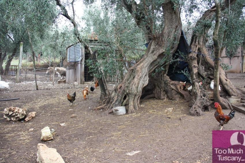 Animals at Cannarozzi Farm
