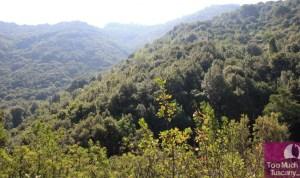 Wild Elba