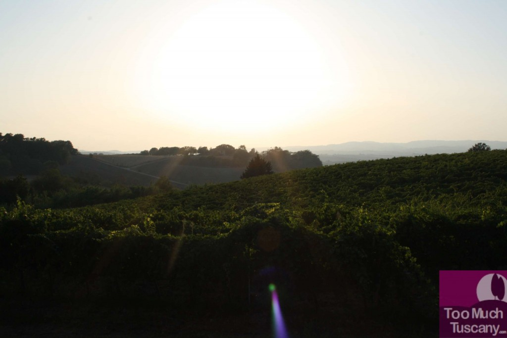 Vineyards of Villa Acquaviva