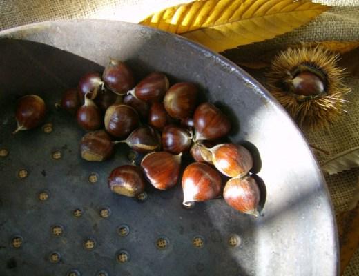 Marroni Chestnuts