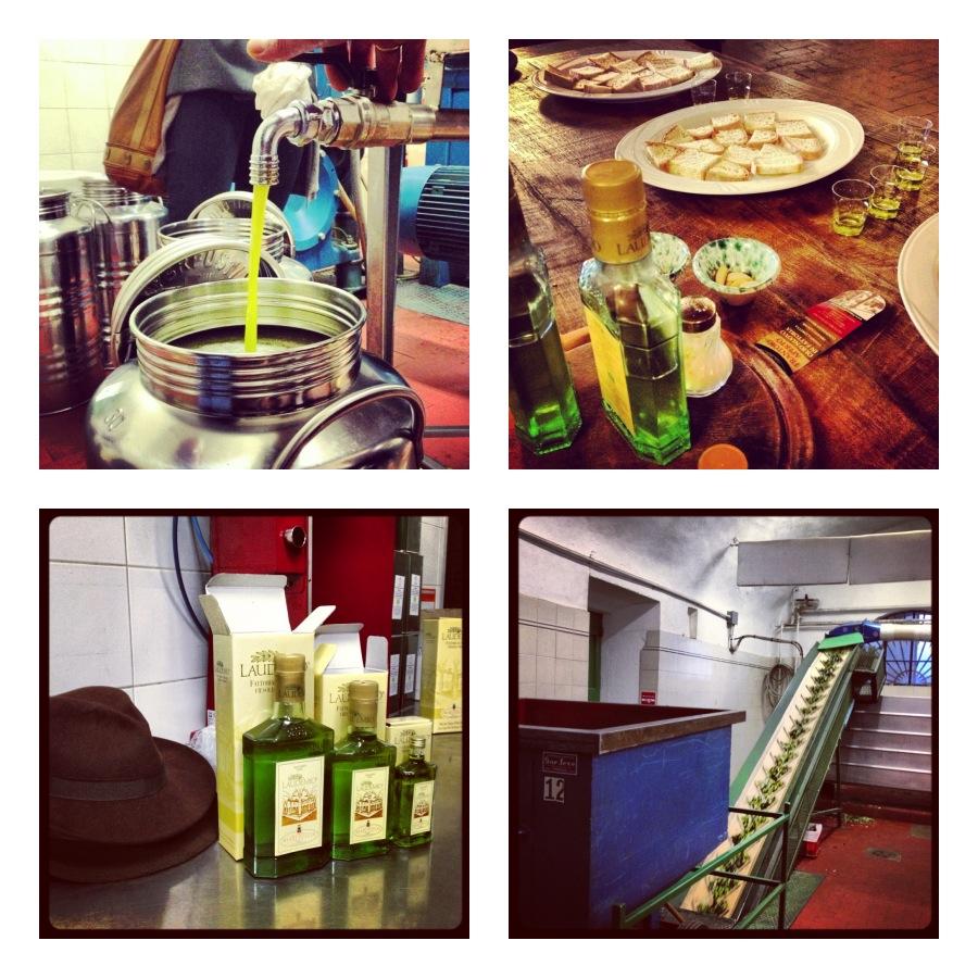 Laudemio extra virgin olive oil