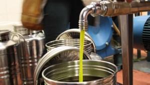 Laudemio extra-virgin olive oil