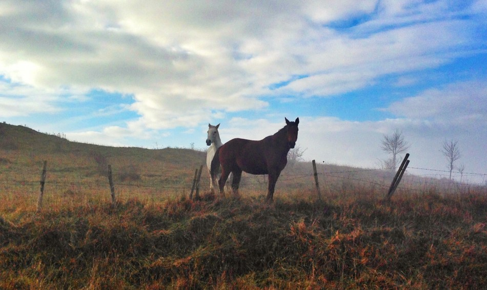 Horses along the Francigena